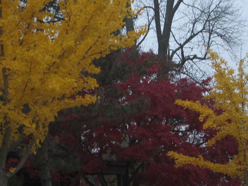trees in rochester ny