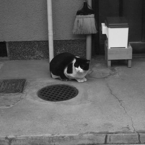 Today's Cat@20091203