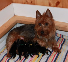 Puppies Born December 2009