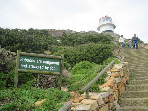 Baboon Warning at Cape Point Lighthouse
