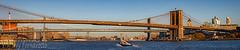 Brooklyn Manhattan Williamsburg Bridges (Jerry Fornarotto) Tags: 3bridges architecture bridge brooklyn brooklynbridge city cityscape cr2017 eastriver infrastructure jerryfornarotto landmark lowermanhattan manhattan manhattanbridge newyork newyorkcity newyorkcityscape newyorkpanorama ny nyc outdoors panorama panoramic river scenic sky skyline suspension three threebridges travel urban water waterfront williamsburgbridge