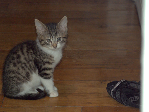 Pink our new cat