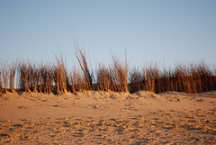 sunset light on the dunes (pacific sphere) Tags: sky nature natural environments fiatlux myfavshots