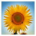 sun image, photo or clip art
