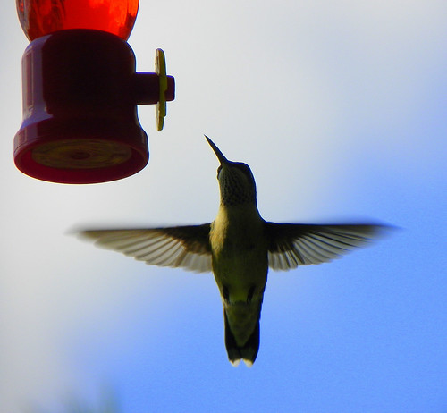 Hummingbird Aerodynamics
