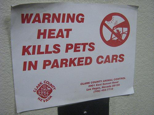 cars pets