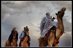 Daraj Festival of the international tourism Session 12         ( [ Libya Photographer ]) Tags: tourism festival an international camel session 12 libya camello deve  touareg camelo chameau libia libye  libi libyen      lbia  libi daraj      libija geogr    nc          lbija  liiba      lba