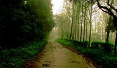 Foggy Road.. (αвнι) Tags: road trees india mist fog canon is woods falls karnataka abhi kemmanagundi s5 hebbe mense abhijeet