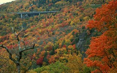 Linn Cove Viaduct (OakesHistory) Tags: autumn nc linncoveviaduct grandfathermtn