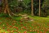 Sunday afternoon walk (tropicaLiving - Jessy Eykendorp) Tags: autumn bali nature indonesia landscape colours scene efs1022mm bedugul outdoorphotography sundayafternoonwalk canoneos50d bedugulbotanicalgarden bwcpl tropicaliving kebunrayaekakarya rawproccessedwithdigitalphotopro tiffproccessedwithadobephotoshopcs3