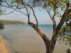 Med (Bricheno) Tags: ocean tree beach island sand berries greece albania corfu kerkyra mediterraneansea ioniansea ionian kassiopi kalamaki corf ionianislands  kalamakibeach  krkyra bricheno  kassopaia kassopea