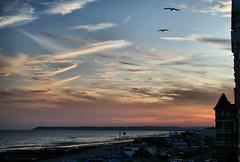 Last light (larigan.) Tags: uk sunset sea england seagulls beach clouds unitedkingdom beachyhead bexhill coastuk larigan phamilton welcomeuk