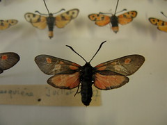 (miss Tempel) Tags: de vacances fabre lafrance serignan hamas insectsmothbutterflybeetlemusee