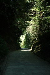 堀割の細道