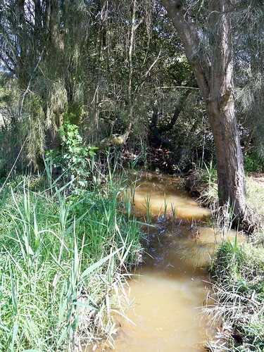 Wee muddy creek at Ironbark Point (near Green Pt)