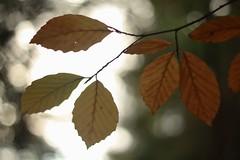 IMG_4685 (Jonathan Carr) Tags: autumn leaves rural landscape northeast landed