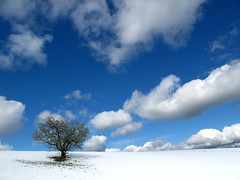 Uros Petrovic - Early Snow And Lonely Tree (Uros Petrovic) Tags: blue sky white mountain snow tree uros clouds early tara snowy serbia lonely lonelytree petrovic srbija earlysnow taramountain worldthroughmyeyes