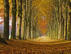 All the leaves are brown (RainerSchuetz) Tags: autumn trees fall leaves lyrics alley alleyway parkway indiansummer californiadreamin allee flickrrocks coth mamasandthepapas treerow b