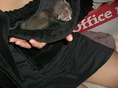 smallest one (mikomaruGT) Tags: baby cat kitten kitty