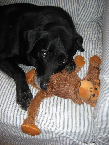 See.... he really does love the monkey!