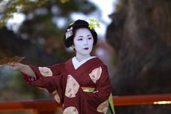 Iwai-mai  #3 (Onihide) Tags: kyoto maiko mapleleaf kitanotenmangu kamishichiken momijien naokazu ichiteru katsuru onihide iwaimai
