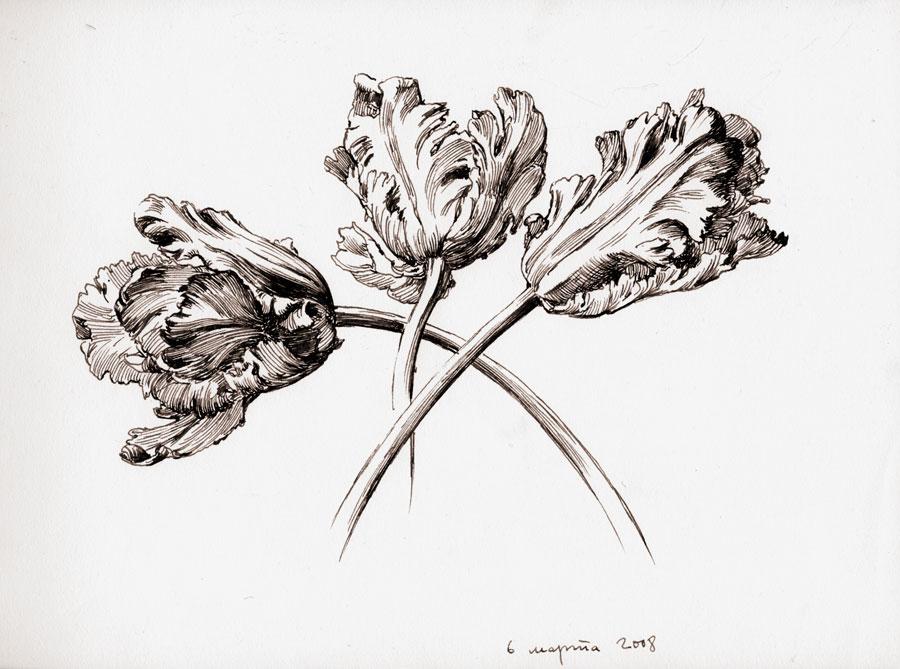 Tulips 1(08)