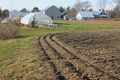 Johnny's Selected Seeds tilled field (Johnny's Selected Seeds) Tags: greenhouse kale hoophouse johnnysselectedseeds lateautumn researchfarm