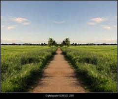 Landschaft (gespiegelt) (GLOBI  FUZZI) Tags: green nature natur feld wiese kln grn spiegelung weg canoneos50d klnbrck globifuzzi