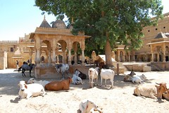 shade (w.aranda) Tags: world life india heritage de la site foto william unesco vida shade heat universal jaisalmer rajasthan cachondeo nearly humanidad aranda patrimonio unbearable txotxoloko williamaranda