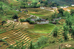 Rice Fields On The Sapa Road (Tim.D Photography) Tags: panorama color green nature field montagne landscape asia rice outdoor north vert vietnam asie paysage ricefields moutain hdr couleur nord sapa banho laocai vietname tavan ベトナム wietnam exterieur northvietnam nordvietnam فيتنام вьетнам βιετνάμ