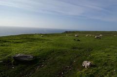 DSC_2665 (Alexandre Moreau | Photography) Tags: uk england lundy lundyisland isleoflundy