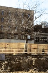 A modest skirt (pop archaeologist) Tags: city nyc newyork building tree film brooklyn downtown pit dirt constructionsite flatbushave nikonfe manualfocus proppedup micronikkor 55mm28 plywoodfence