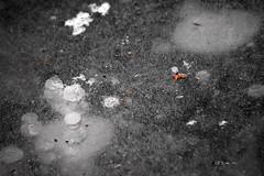 bubbles glass by QFS_mlp (QueenFaeeStudio) Tags: canon luci lights sartirana calco bianconero blackwhite bolle bubbles lake pond stagno laghetto