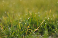 Water drop (Mattia Pianca) Tags: nikon d90 nikkor nikkor85mm18g nikon85mm18g 85mm 85 85mm18g bokeh erba grass green verde macro drop goccia water shimmer ngc nature natura winter 2017 inverno rugiada dettagli awsome