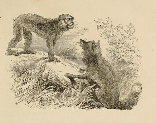 Simius et Vulpes