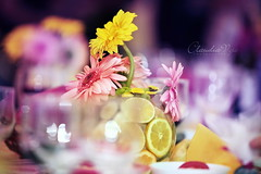 decolife (claudiaveja) Tags: pink flowers color green yellow photography dof stock images depthoffield again concept transylvania cluj royaltyfree purpule rightsmanaged claudiaveja rightmanaged claudiavejacom decolife