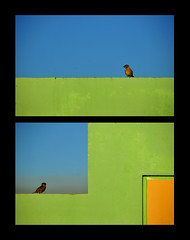 Boxed In ([museopath]) Tags: blue orange green birds diptych tetris artisticconception bakonawa dipitthursday adrianmedina
