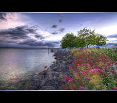 Flowers at the shore (Tambako the Jaguar) Tags: flowers trees sky lake switzerland nikon rocks wideangle frame hdr neuchtel d300 photomatix serrires vosplusbellesphotos herowinner