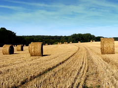 After the harvest...the straw bales (mujepa) Tags: summer field landscape champs harvest straw hay paille strawbale moisson bl meules rouleaux