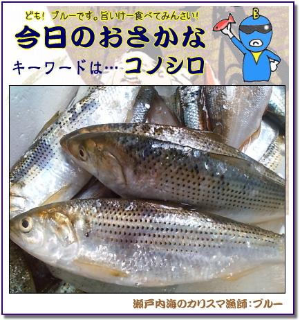 コノシロ、お寿司屋さんで出てくる「コハダ」は同じ魚【瀬戸内の魚】