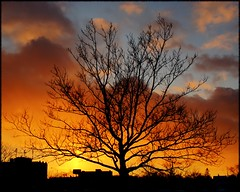 tree at sunset (Now and Here) Tags: blue sunset sky orange toronto ontario canada tree silhouette skyline clouds fb branches sony explore alpha dslr fp frontpage mostviewed a300 christiepits explorefrontpage view500 explore42 fave10 platinumheartaward fave50 sonydslra300 fave25 fave100