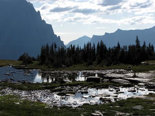 Glacier National Park-27