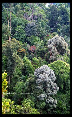 Bukit Tabur Forest