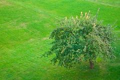 20090829-IMGP2108 (melazzouzi) Tags: arbre pomme