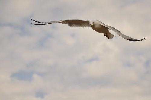 seagull 2 of 4
