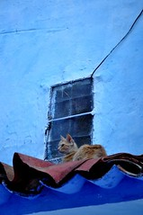 chefchaouen (nisilyani) Tags: africa blue heritage morocco medina chaouen chefchaouen marov maghribi