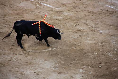 bull fight- bull