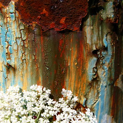 Smelling flowers with haunting tear trails... (Dialed-in!) Tags: street city flowers blue red urban orange white color green art face monster oregon portland graffiti intense rust peeling paint northwest bright artistic or trails rusty vivid sharp clear rusted oxidation pdx tear peel crusty streaming dilapidated peeled anthropomorphism detailed fragment oxidized hiddenface unanimous oxidizing urbanmacro macromondays dialedin thechallengefactory ultimategrind thepinnaclehof tphofweek55