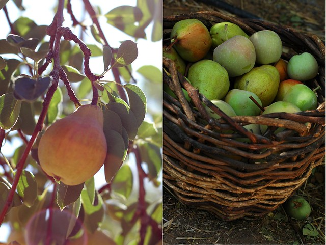 Pear Diptych