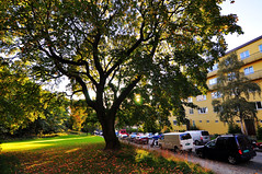 Through The Leaves (stigkk) Tags: street city autumn tree leaves oslo wideangle scandinavia northern nikond90 tokina1116mmf28 stigkk norgenorwaynorueganorwegen